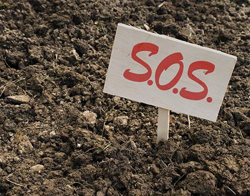 phyre-SOS-soil