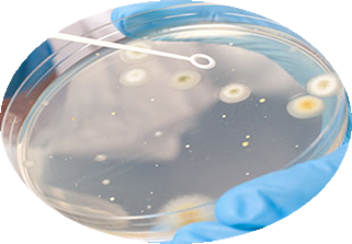 phyre microbe